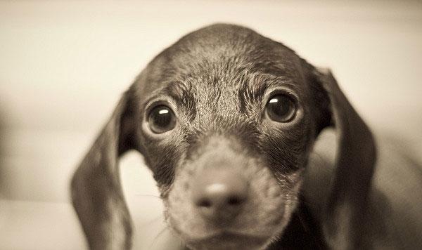 Уроци по фотография: Снимки на животни